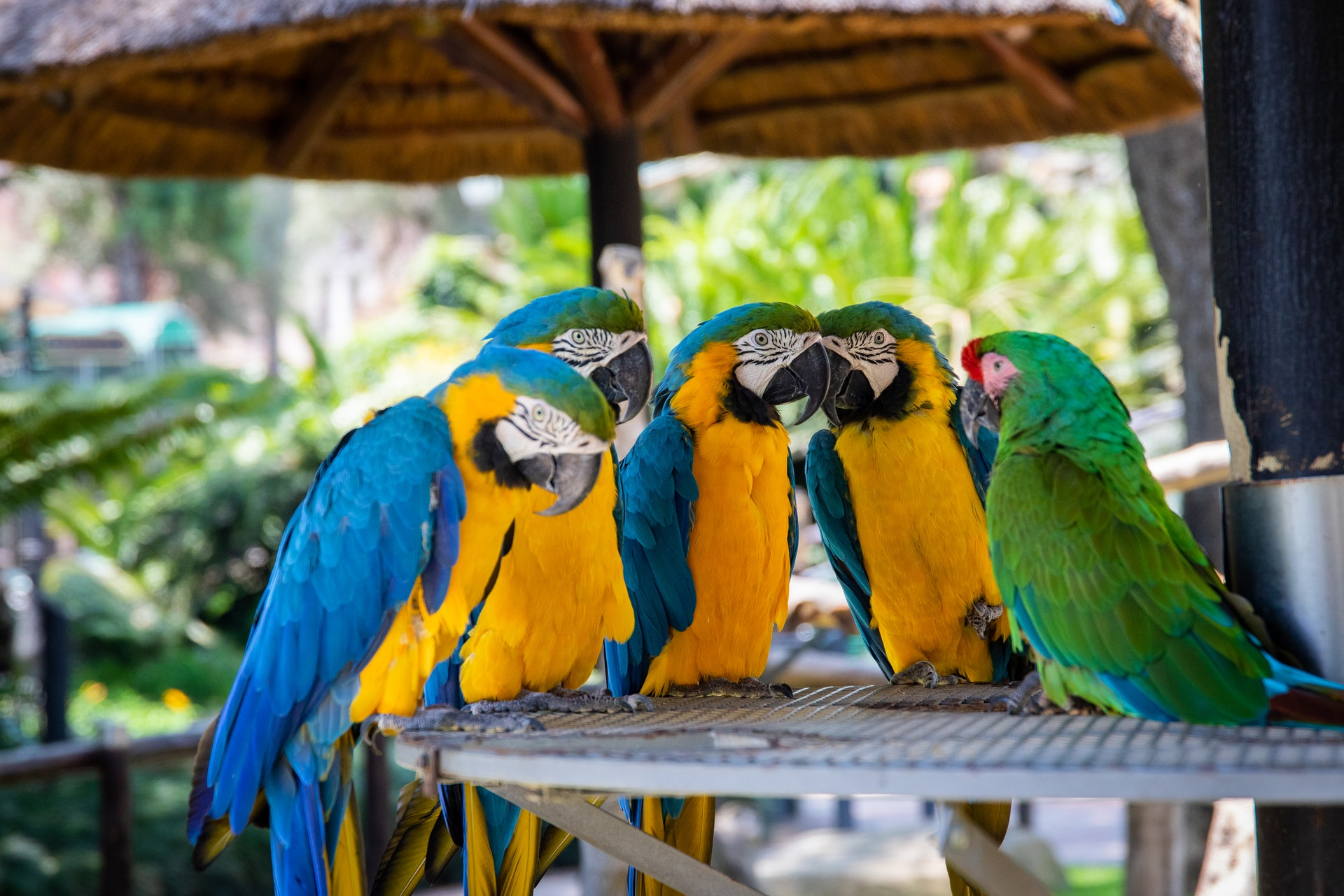 Marketing and Advertising for Zoos